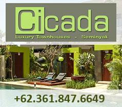 Cicada Photos