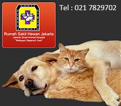 RS Hewan Jakarta Photos