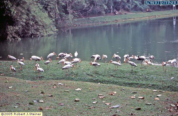 Singapore Zoological, Birds