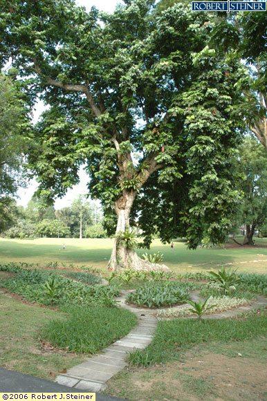 Singapore Botanic Gardens, Plant a Tree