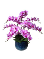 54b607f89120f51c0ea5ab51_orchid-6.jpg