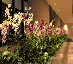 Mirage Design Landscape & Contract Pte Ltd Photos