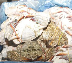Lee Huat Seafood Supplier Photos